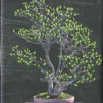 Bonsai-IV-2009