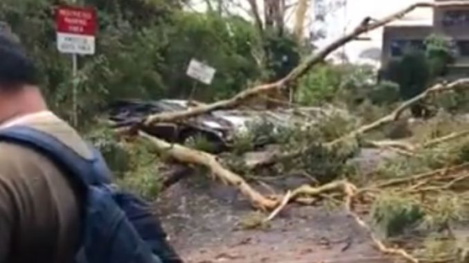 Power cut to 40,000 homes, trees uprooted as storm hits Sydney