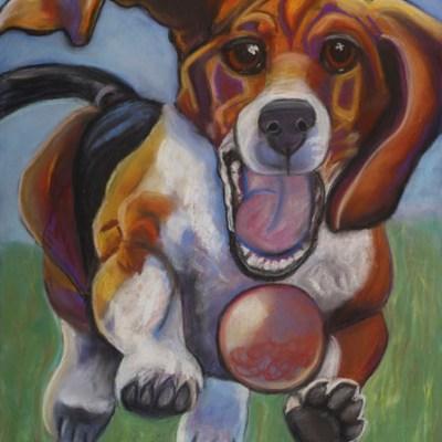 Got Balls - Beagle running after ball