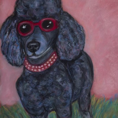 Poodle in sunglasses