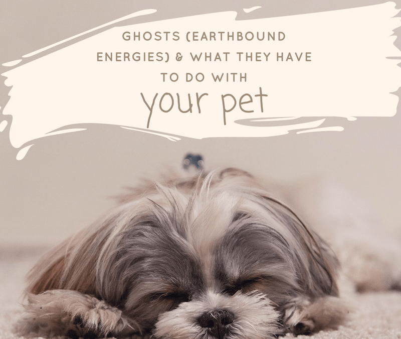 Ghosts (Earthbound energies) & what they have to do with your pet