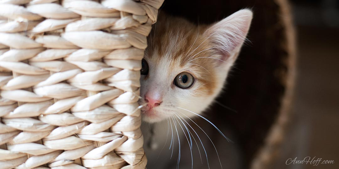 Let MeOwt! The Real Reason Your Cat Isn't Loving Life Indoors