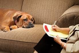 New Insights In Canine Psychology