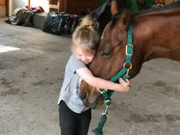 Owning a horse- What you need to know