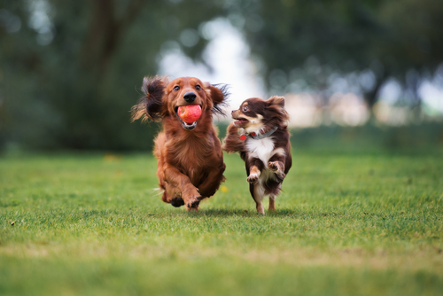 The Foundations Of A Healthy Lifestyle for Dogs