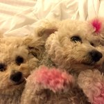 Graciy & Lucie Pink Feet