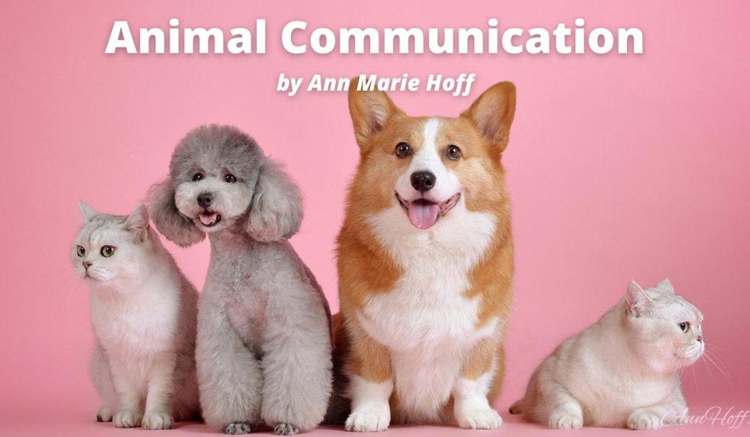 Animal Communication by Ann Marie Hoff