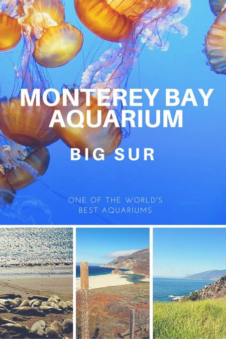 Monterey Bay Aquarium: One of the best aquariums in the World. Located in Big sur, it's a good place to stop on a road trip from San Francisco to Los Angeles. #California #Roadtrip #Aquarium