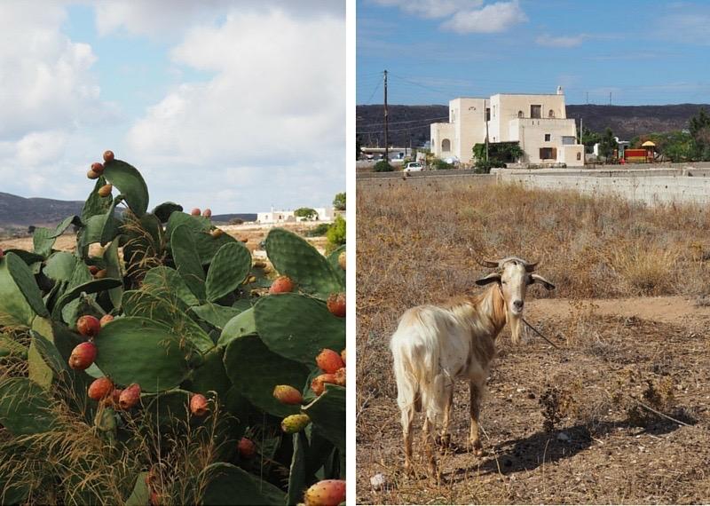 Discovering Naxos island