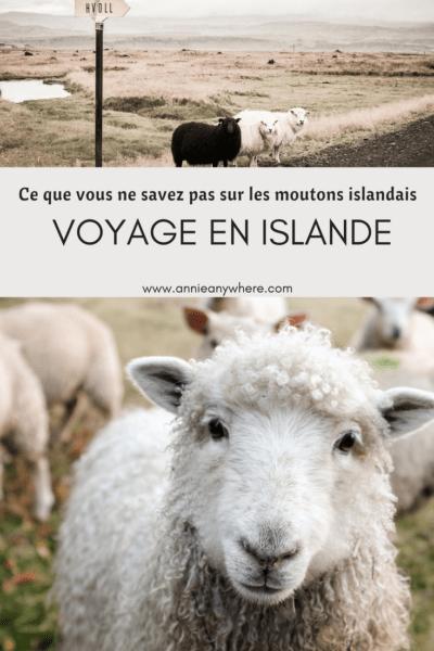 En Islande, il y a des volcans, des glaciers, des geysers...mais il y aussi beaucoup de moutons! Vous connaissez l'histoire d'amour qui est relié à tous ces moutons? #islande #voyage #voyagevoyage