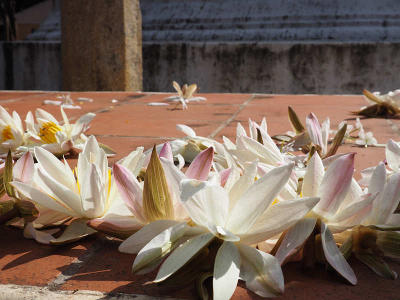 Lotus à Minhintale