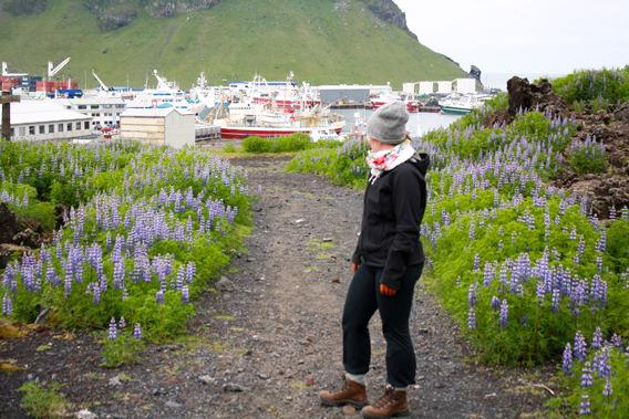 Itinéraire en Islande - Îles Vestmann