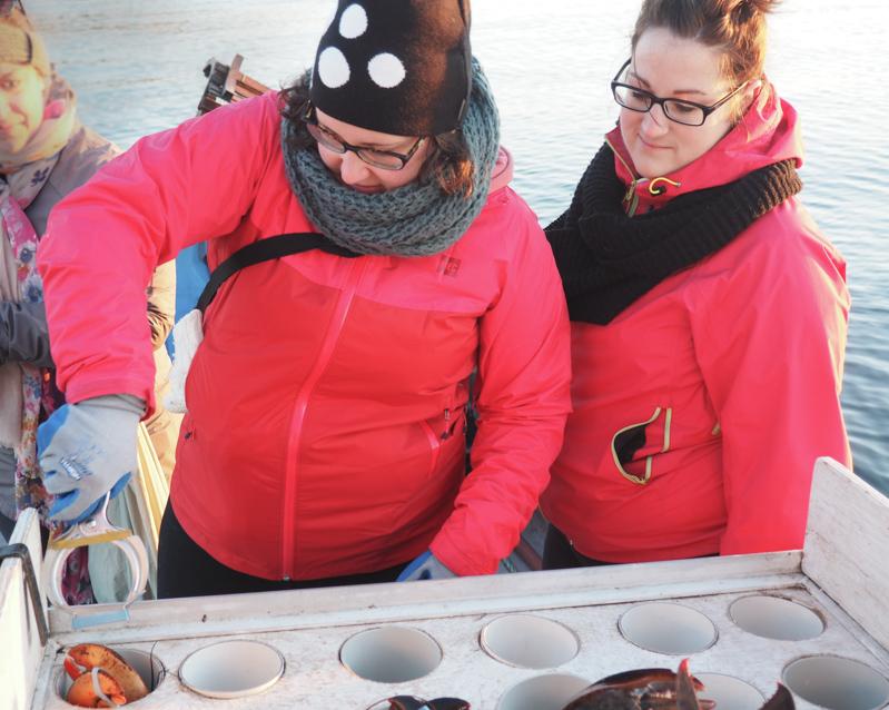 Mettre les élastiques aux homards