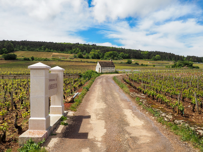 Chemin de vignobles en Côte d'Or en Bourgogne.