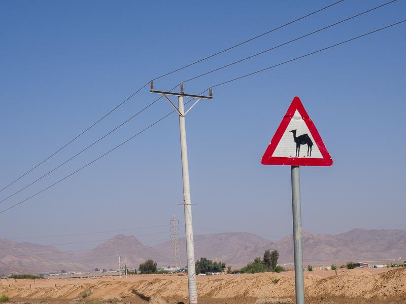 Traverse de chameaux en Jordanie