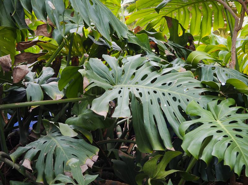 Il y a plus de 300 espèces végétales au Jardin Majorelle de Marrakech