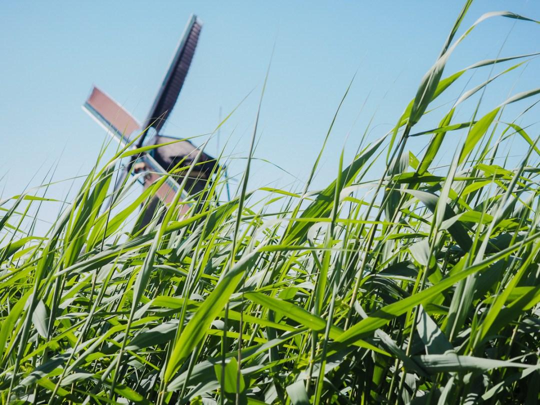 Moulin à vent derrière un champ