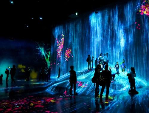 Salle Flower Forest de l'exposition teamLab Borderless à Tokyo