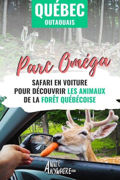 Partez en road trip au Québec et explorez la région de l'Outaouais. Le Parc Oméga et son safari en voiture vous permet d'observer et de nourrir les animaux du Québec et du Canada. Un incontournable à découvrir lors de vos vacances au Québec.
