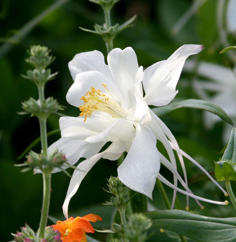 Zone 5a Perennials
