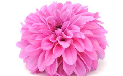 14 year anniversary flower