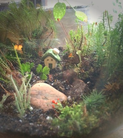 happy terrarium