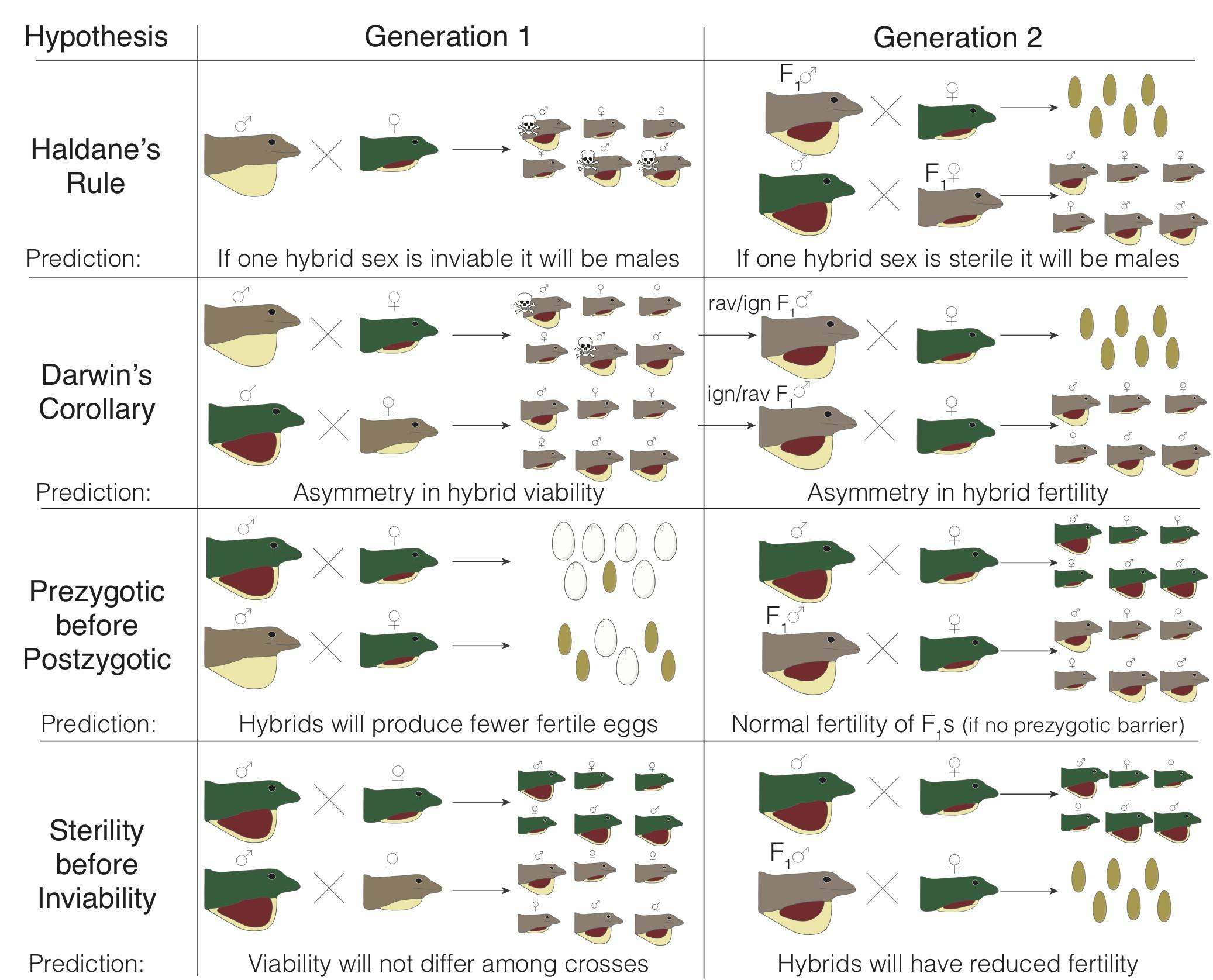 Evolution Meeting Genetic Differentiation Dewlap