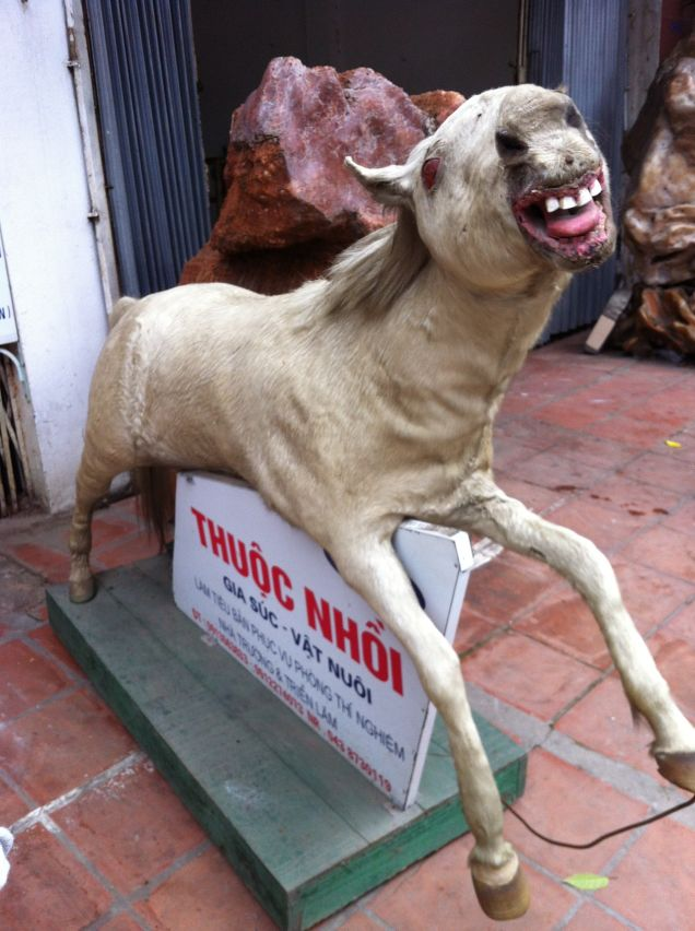 Anorak News Terrible Taxidermy 19 Hellish Examples Of
