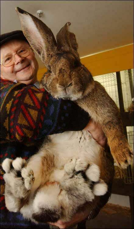 In a room about 100 kilometres south of Stockholm, 1648 rabbits are ready.