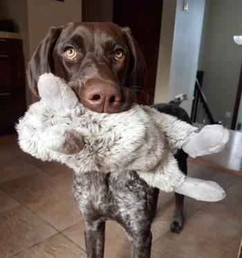 Izzie with rabbit