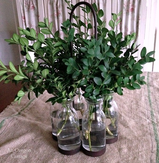 Preserving Boxwood in Glass Milk Bottle and Iron Vase