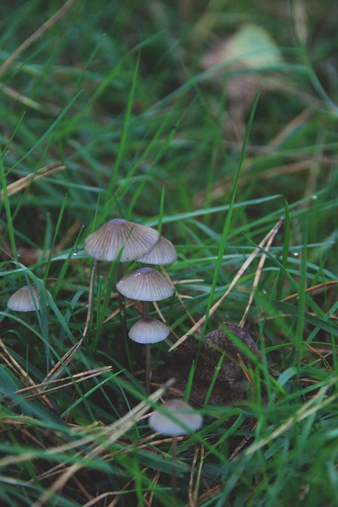 Small mushroom family