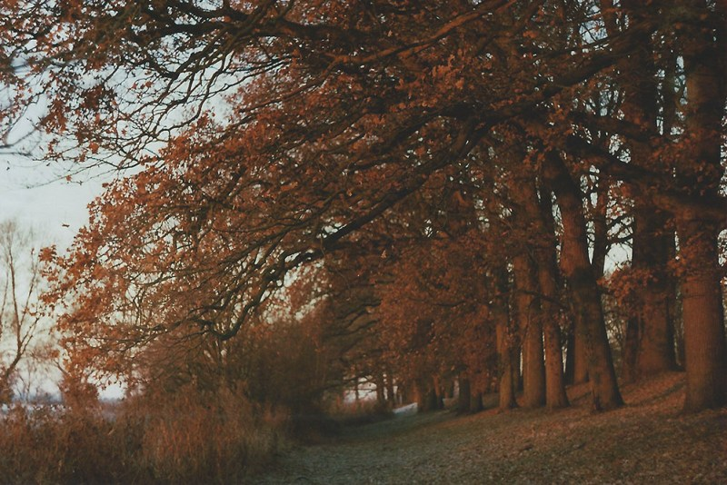 Sunrise trees | another reverie
