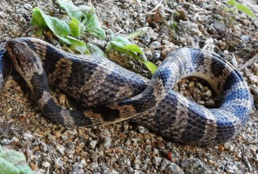 Close Encounters of the Snake Kind