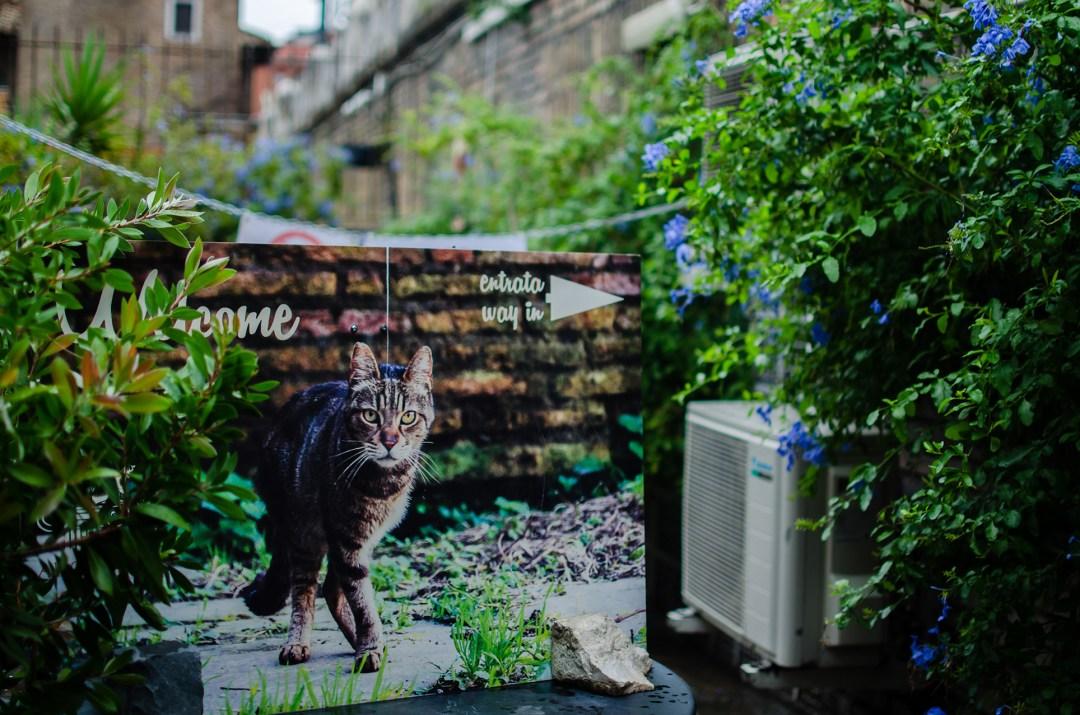 torre-argentina-cat-sanctuary