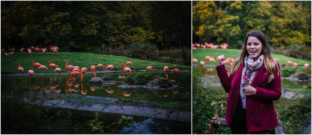 flamingo tierpark berlin