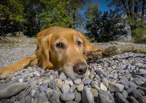 Il cane è il migliore amico dell'uomo da più di 9.000 anni (fonte: Pexels) © Ansa