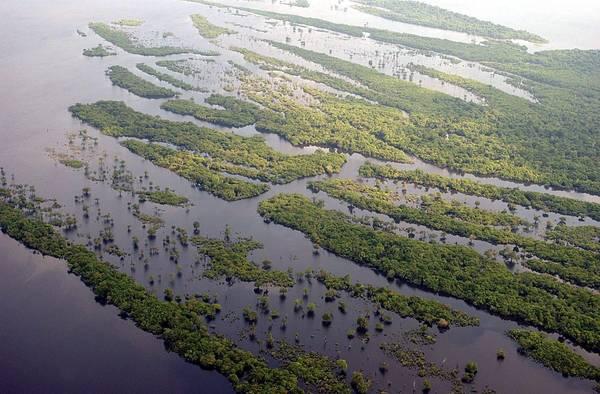 Sottostimata mortalita' foreste tropicali nel bilancio CO2