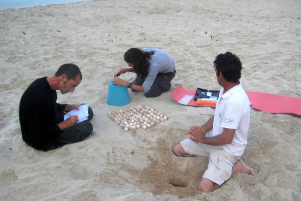 'Caretta caretta' depone 82 uova a Lampedusa