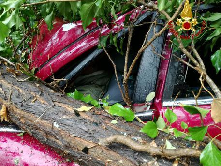 Maltempo: albero su auto all'Elba, ferite lievi per 2 donne © ANSA
