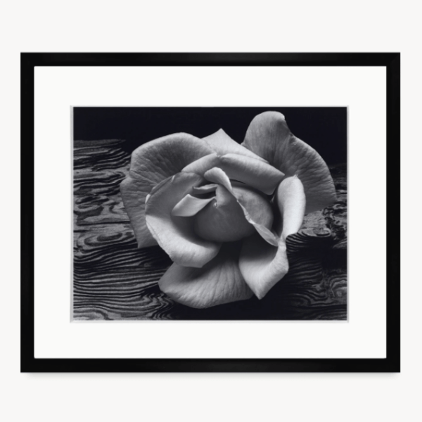 Rose and Driftwood by Ansel Adams