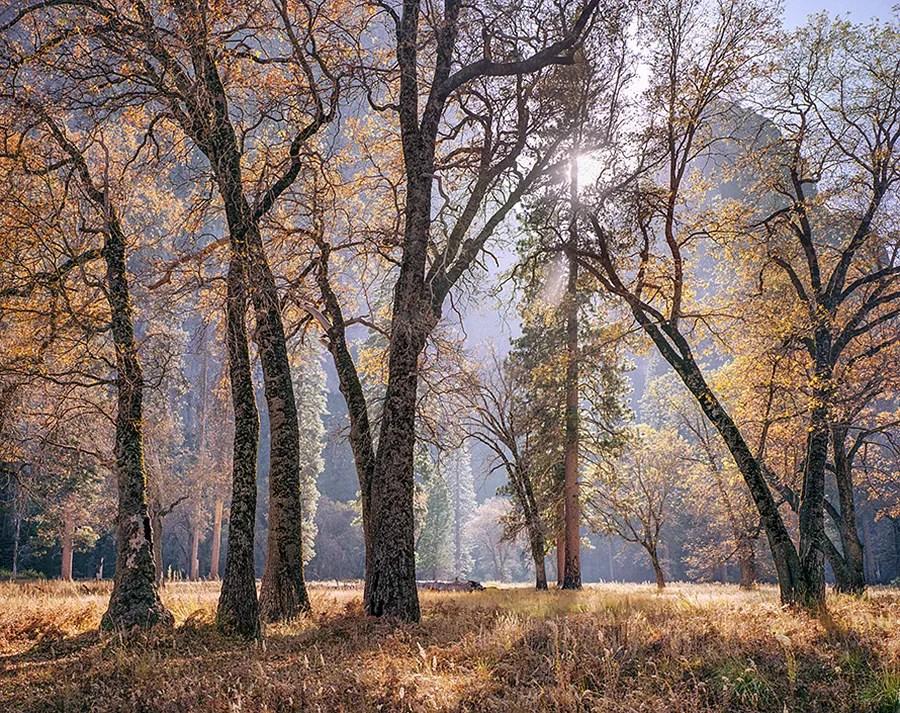 Meadow and Sun, Autumn, Yosemite