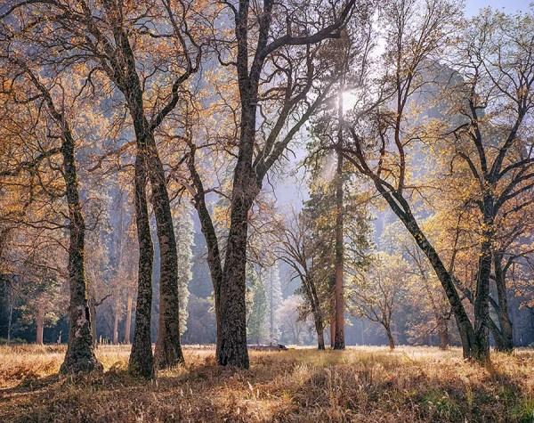 Meadow and Sun, Autumn, Yosemite photograph