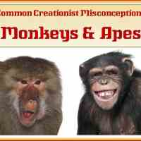 Common Creationist Misconceptions - Apes and Monkeys