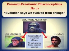 Evolution says we evolved from chimps