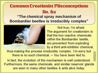 Creationist Misconceptions No. 62 - Bombardier beetle