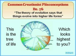 Creationist Misconceptions No. 76 - Higher life