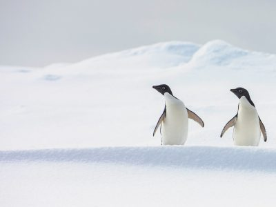 Image of How To Visit Antarctica