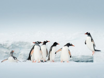 Image of Expedition Classic Antarctica Air Cruise