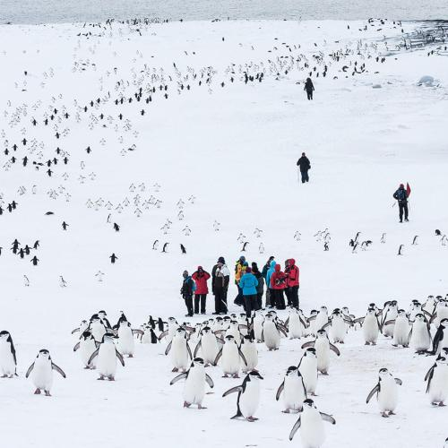Colony of Chinstrap penguins in Antarctica, photography by Jonathan Zaccaria.